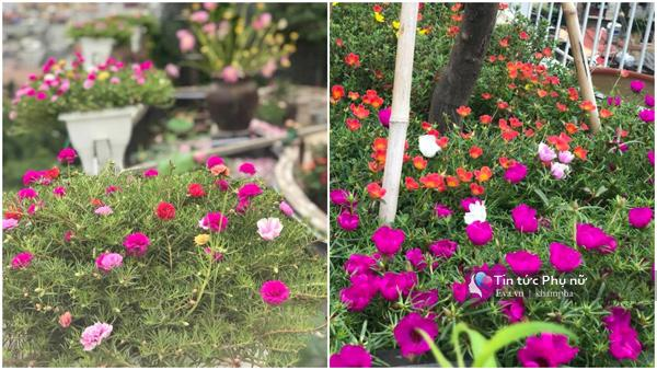 Chuyển hàng tấn đất làm ao sen, trồng hồng trên sân thượng, mẹ HN xây amp;#34;thiên đườngamp;#34; phủ kín hoa - 8