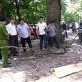 Tin tức - HN: Tử vong vì cành cây rơi trúng đầu