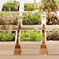 Nhà đẹp - Tự trồng rau mầm ngắm chán thì 'xơi'