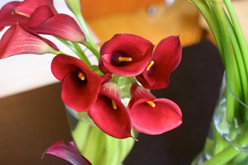 hoa dep 20-10: 3 mau hoa rum de cam - 3