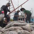 Mua sắm - Giá cả - Ngư dân hối hả bán cá chạy bão