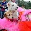 Tin tức - Đại gia tổ chức đám cưới 'linh đình' cho... chó