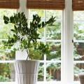 Nhà đẹp - Cách trồng chanh tươi tốt vào mùa đông