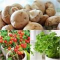 Nhà đẹp - 3 loại rau củ dễ trồng tại nhà