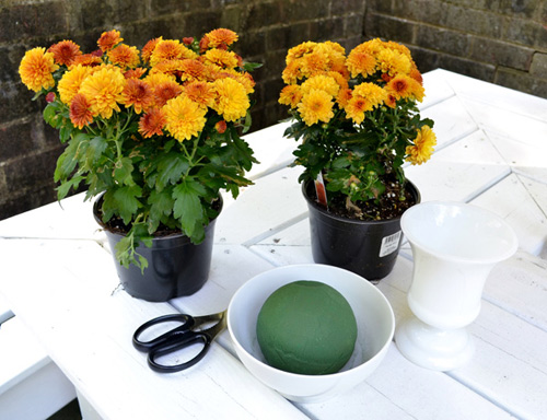 cam hoa cuc de ban dep trong 5 phut - 1