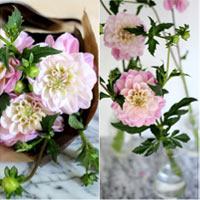 cam hoa cuc de ban dep trong 5 phut - 8