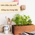 Nhà đẹp - Làm chậu cây xinh trồng rau trong bếp