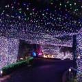 Tin tức - Úc: Đón Noel bằng 500.000 bóng đèn nháy