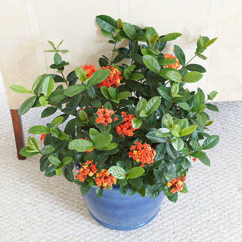 goi y 14 hoa canh dep, thom choi tet - 6