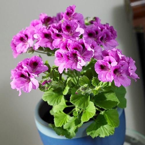 goi y 14 hoa canh dep, thom choi tet - 7
