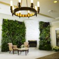 Nhà đẹp - Vườn đứng: Giúp nhà đẹp lại lợi sức khỏe