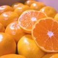 Mua sắm - Giá cả - Gần Tết, phát hiện quýt, cà rốt nhiễm độc