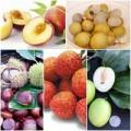 Làm đẹp - Những loại trái cây càng ăn càng nổi mụn