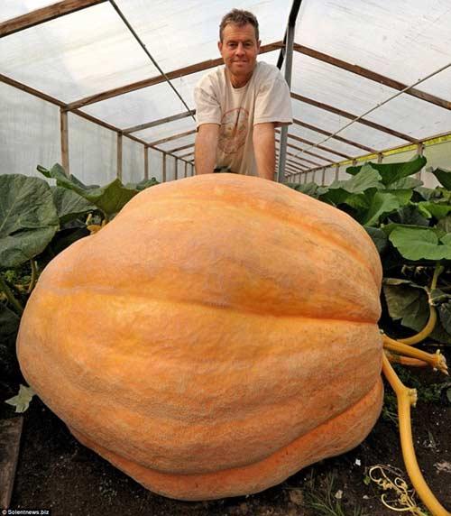 choang voi qua bi ngo khong lo nang 726kg - 5