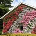 Nhà đẹp - Vườn treo tường mát mắt cho nhà chật