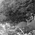 Tin tức - Động vật tưởng tuyệt chủng 85 năm được phát hiện ở Thanh Hóa