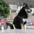 Tin tức - Top 10 chú chó trung thành xúc động lòng người