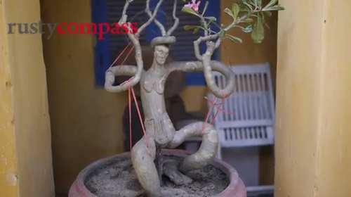 vuon bonsai nho xinh o nha co hoi an 300 nam - 7
