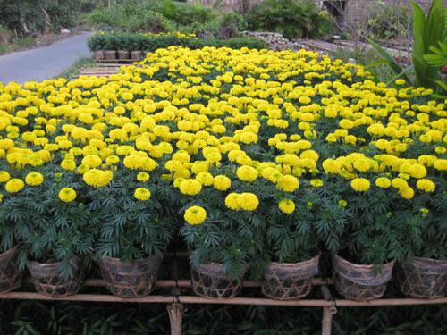 5 cây thuốc quý dễ trồng trong vườn nhà-3