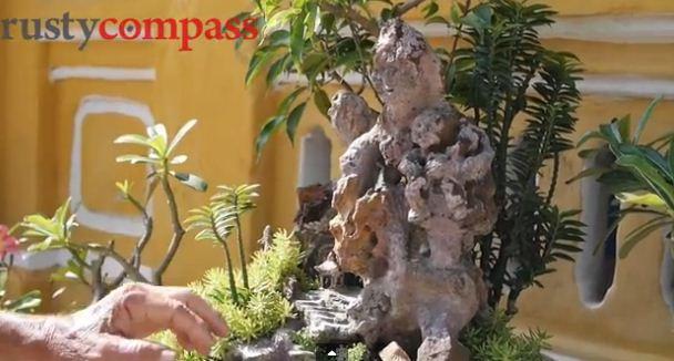 vuon bonsai nho xinh o nha co hoi an 300 nam - 5