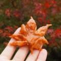 Bếp Eva - Độc đáo: Lá phong chiên giòn của người Nhật