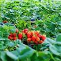 Bếp Eva - Đặc sản Lâm Đồng mang hương sắc cao nguyên