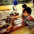 Làng sao - Con gái Triệu Vy thản nhiên chơi đùa cùng hổ con