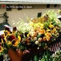 Nhà đẹp - Tự làm phân bón từ... vỏ chuối cho vườn ban công