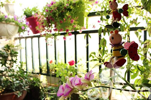 Thăm ban công hoa tình yêu ở quận Từ Liêm - 12