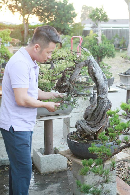 vuon bonsai tien ty o my cua bang kieu - 2