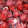Bếp Eva - Vào mùa, hoa atiso đỏ giá 25-30.000 đồng/kg đắt hàng