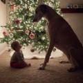 Clip Eva - Chú cún quấn quýt bên bé mới chào đời
