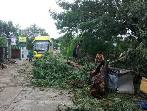 Phú Yên – Bình Định: Nhà sập, cây xác xơ sau bão số 4 - 5