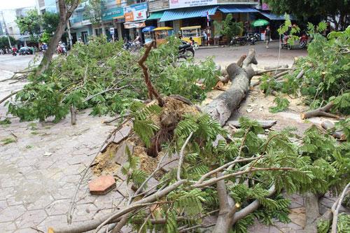 Phú Yên – Bình Định: Nhà sập, cây xác xơ sau bão số 4 - 7