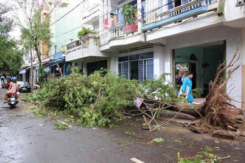 Phú Yên – Bình Định: Nhà sập, cây xác xơ sau bão số 4 - 8