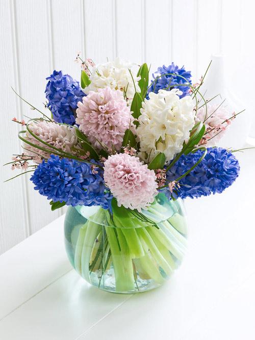 trong hoa tien ong khong kho, mang an khang den nha - 2