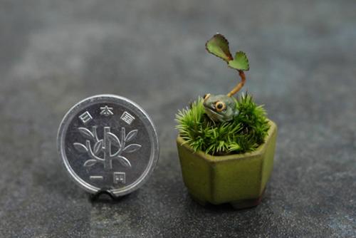 bonsai sieu nho 3cm de thuong cho ban tra - 13