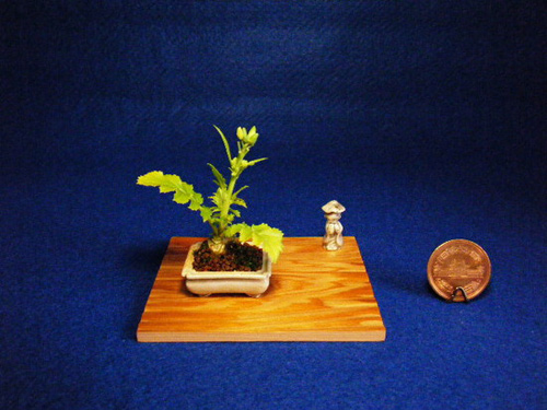 bonsai sieu nho 3cm de thuong cho ban tra - 7