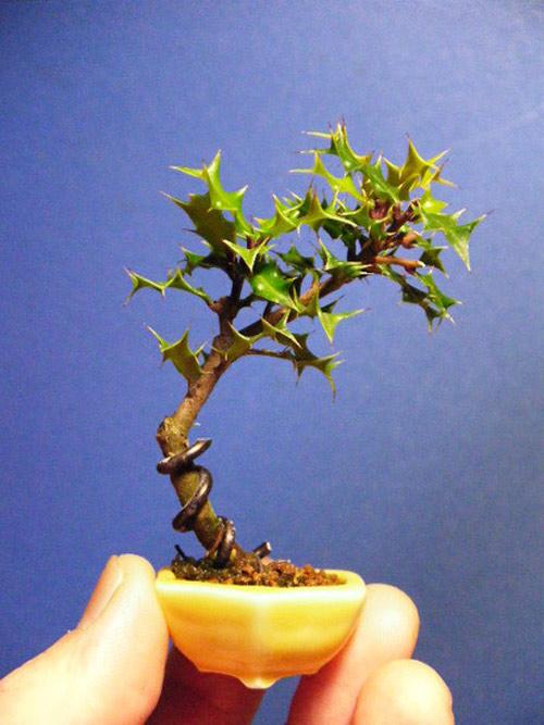 bonsai sieu nho 3cm de thuong cho ban tra - 12