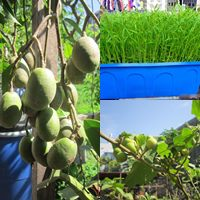 bonsai sieu nho 3cm de thuong cho ban tra - 15