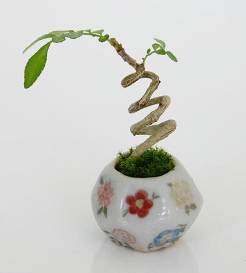 bonsai sieu nho 3cm de thuong cho ban tra - 8