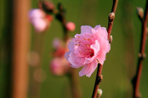 dao som tren cho hoa quang ba - 13