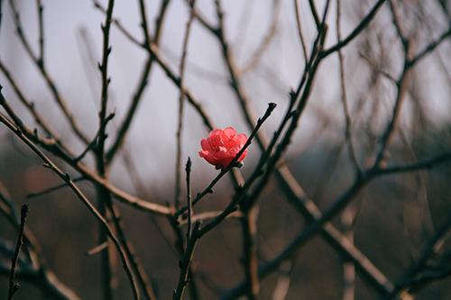 dao som tren cho hoa quang ba - 14