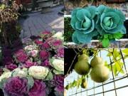 trang tri nha bang hoa tuoi - khong phai luc nao cung tot - 5