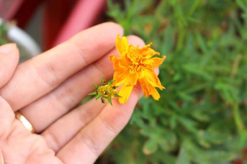 trong hoa canh buom rap ron tham troi thu - 8