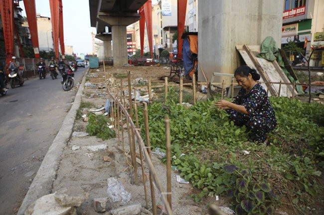 """gap """"nong dan pho"""" trong rau duoi duong sat tren cao - 3"""