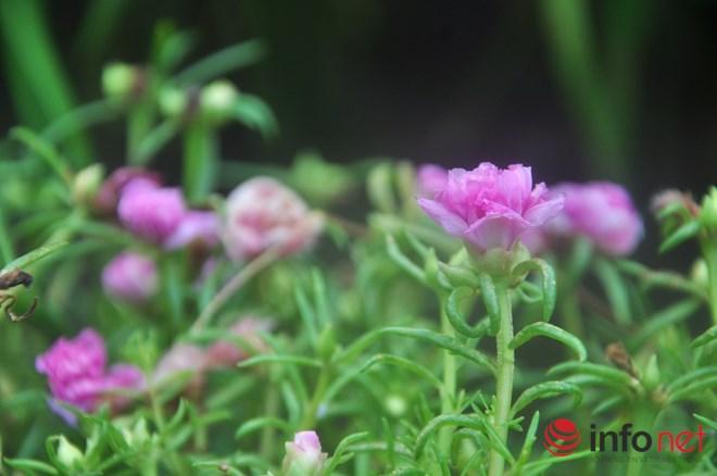 me man con duong hoa muoi gio tho mong cua hai vo chong lao nong - 5