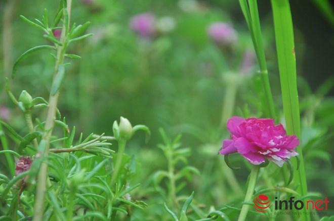 me man con duong hoa muoi gio tho mong cua hai vo chong lao nong - 6