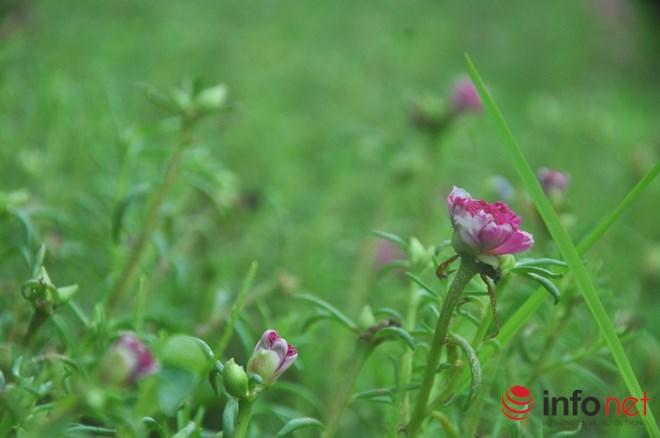 me man con duong hoa muoi gio tho mong cua hai vo chong lao nong - 7