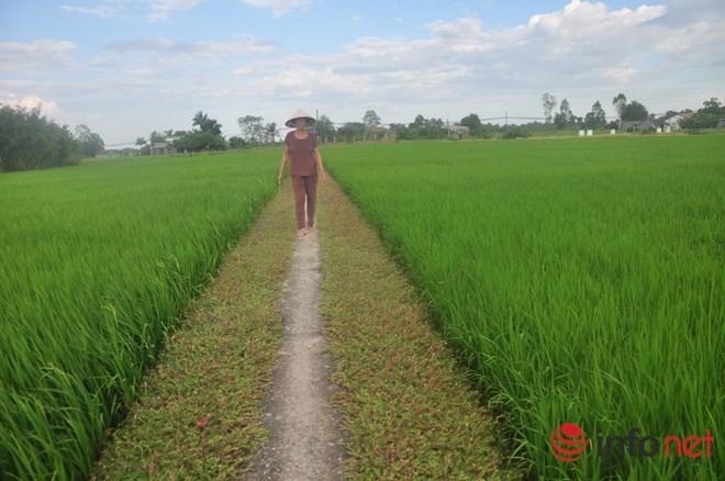 me man con duong hoa muoi gio tho mong cua hai vo chong lao nong - 11